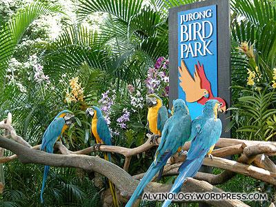 A visit to Jurong Bird Park