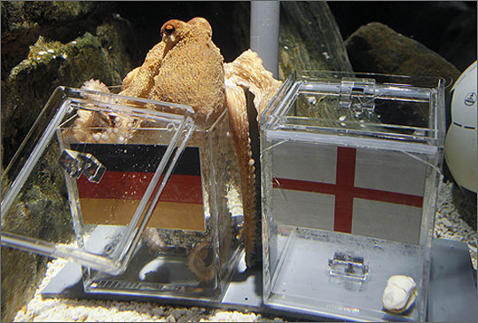 Paul the Psychic Octopus sent packing in a Box