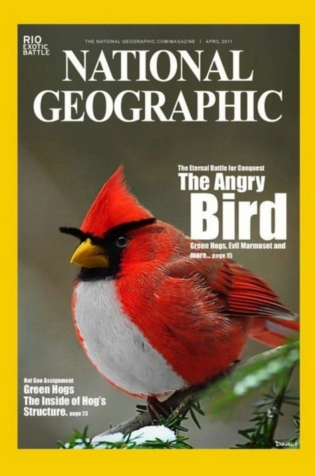 """Real Life Angry Bird"" on the cover of National Geographic magazine"