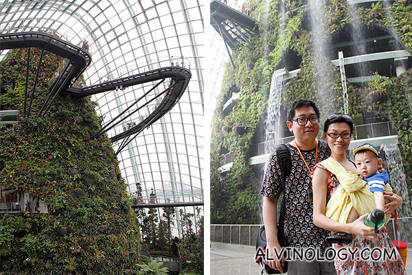 Gardens by the Bay - Cloud Forest - Alvinology
