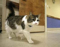 Who is Oscar the cat? - Alvinology