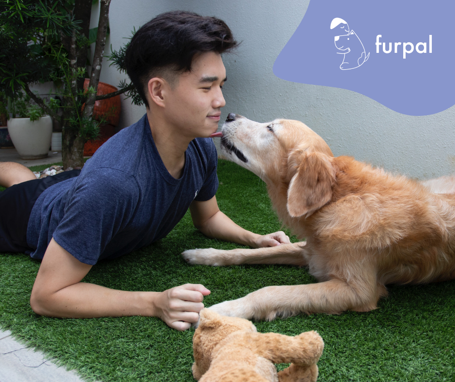 Love dogs but don't own one? You can borrow someone else's dog for the mean time at furpal - Alvinology