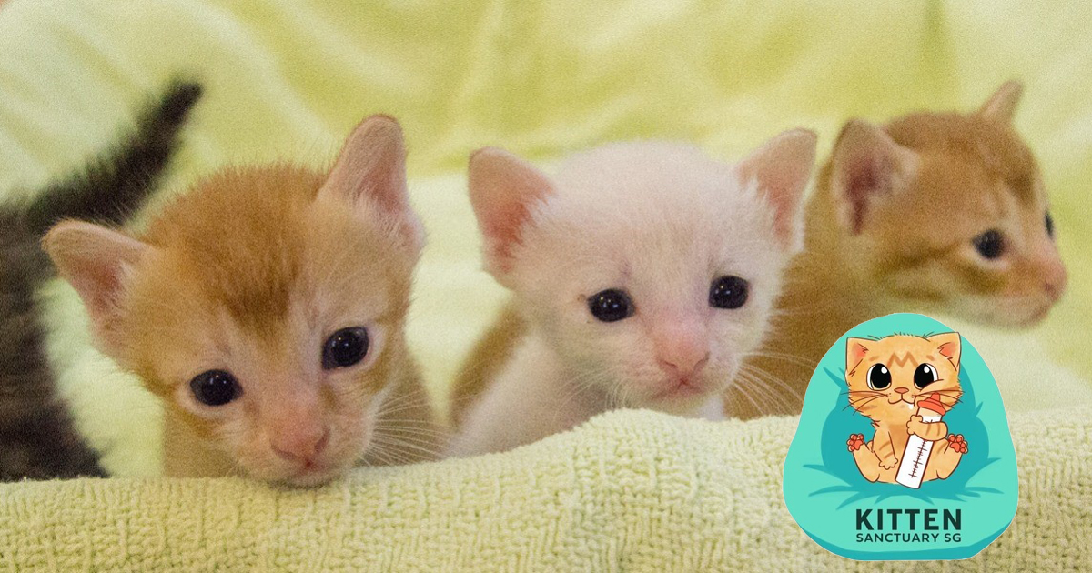 Love cats? Don't just pet one, save one with Kitten Sanctuary Singapore (KiSS)
