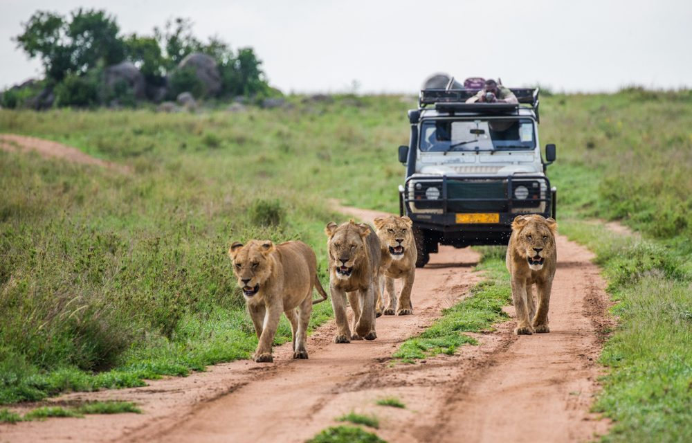 Interesting Facts about AFRICAN LUXURY SAFARIS