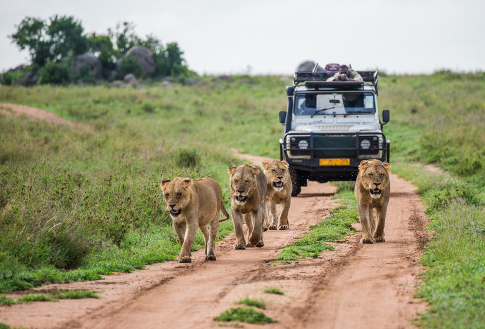Interesting Facts about AFRICAN LUXURY SAFARIS - Alvinology
