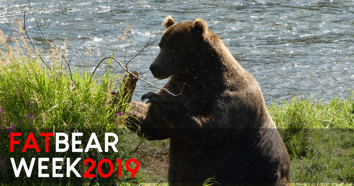 Katmai National Park celebrates Fat Bear Week and just crowned the FATTEST of 'em all