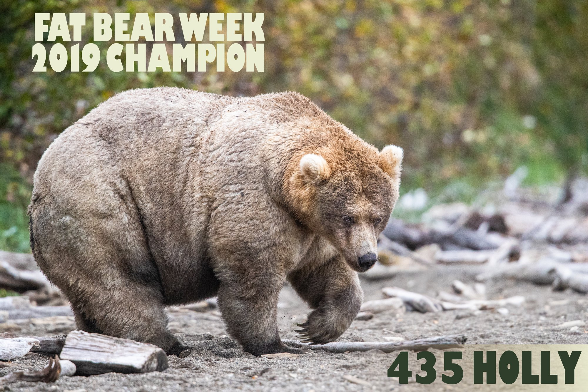 Katmai National Park celebrates Fat Bear Week and just crowned the FATTEST of 'em all - Alvinology