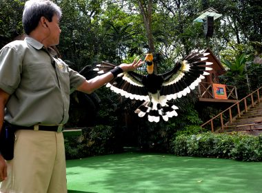 Jurong Bird Park is turning 50 - year-long jubilee festivities take off with $2.50 admission for the whole month of January 2021 - Alvinology