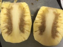 Taiwan apologizes for rotten pineapples, vows to send 12,000 tons more - Alvinology