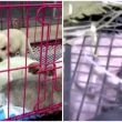 'Pet Mystery Box' scheme leaves 4 out of 160 animals shipped in crates and sacks dead - Alvinology