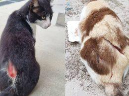 SPCA asks for help identifying cat torturter as cat slasher is arrested - Alvinology