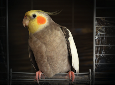 How To Properly Take Care Of Your Bird - Alvinology