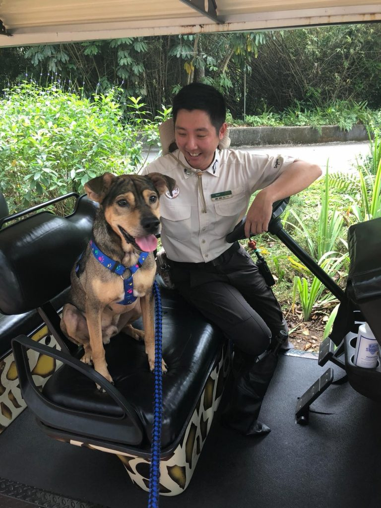 Furever Yours - Singapore Zoo and SPCA introduces pilot programme to find forever homes for dogs in SPCA shelter - Alvinology