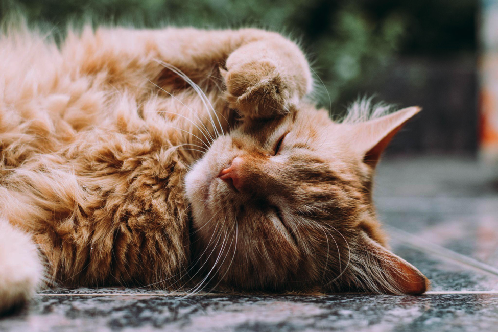 What To Consider When Bringing A Pet Into Your Home - Alvinology